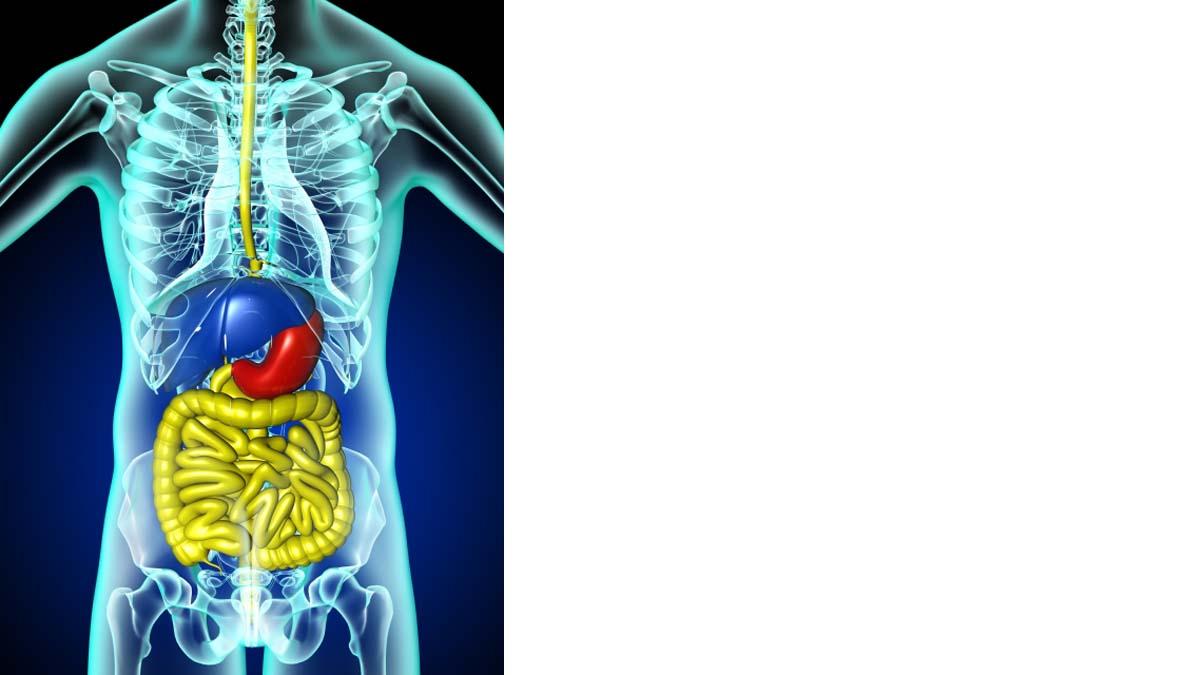 胃のうんちく‐ストレスで胃が痛くなる‐胃の場所は?触れるの?